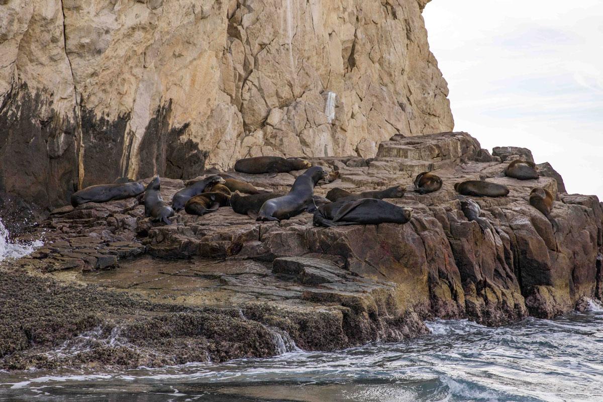 Esperanzas Tours Los Cabos Encounter Sea Lion Colony